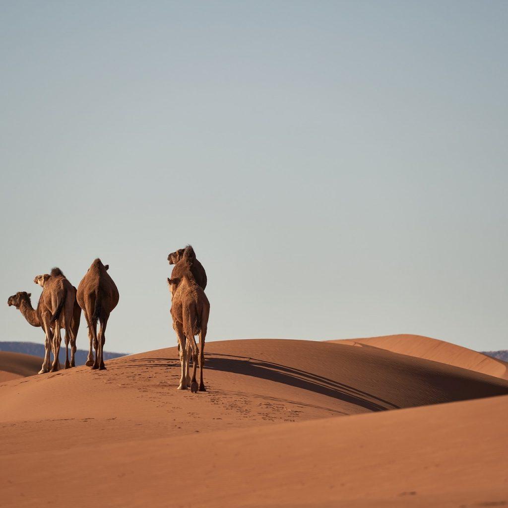 Sahara Wüsten Trek